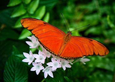 TR-Papillon-Ken Greenhorn