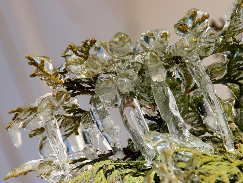 TR-Cedar On Ice-Anita Simpkins