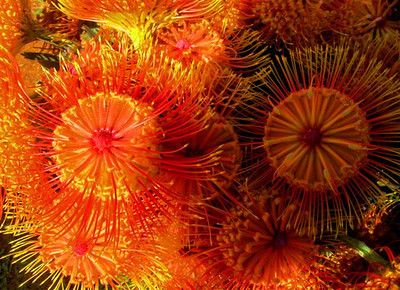 TR-Fireworks-Gordon Sukut