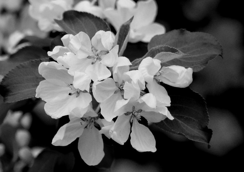 BW-Spring Bloom-Dale Read