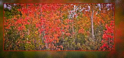 AR-A Season of Color-Kyle Remus