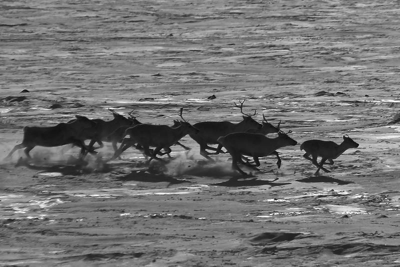 BW-Running Wild-Richard Kerbes