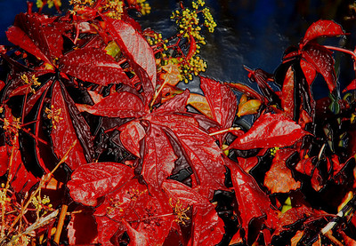 AR-Fall Foliage-Anita Simpkins