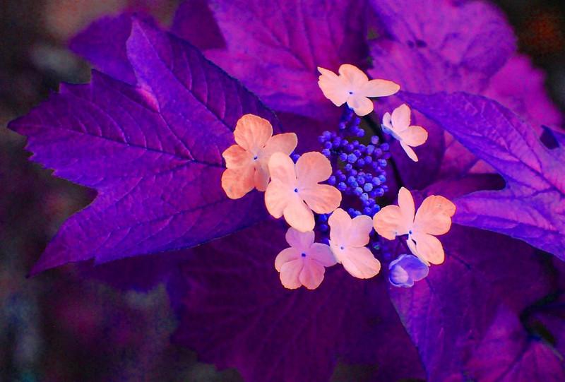 AR-Rare Flora-Helen Brown