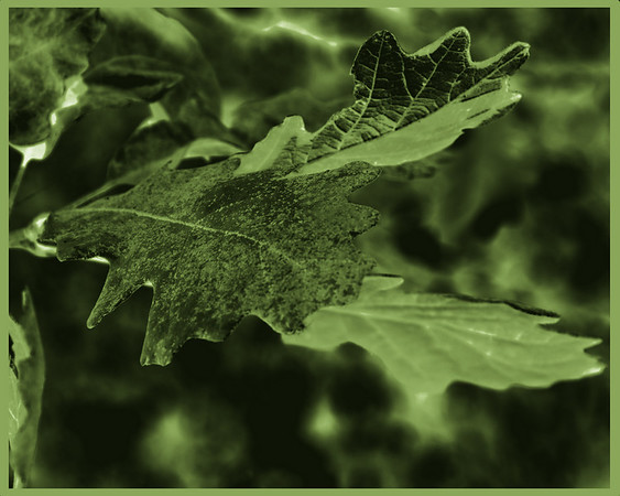 BW-GREEN sLEAVES-Amy Wildeman