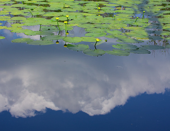 TR-Cloud Garden-Lyle Krahn