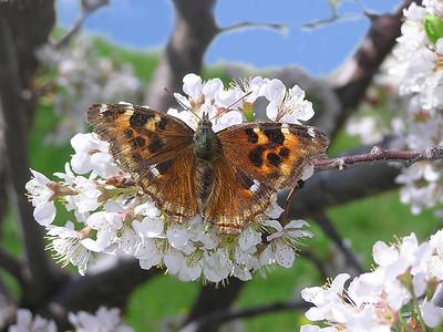 TR-Rite of Spring-Gayvin Franson