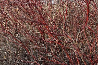AR-Willows Woven Ways-BrendaRose Bellenie-Wynne jpg
