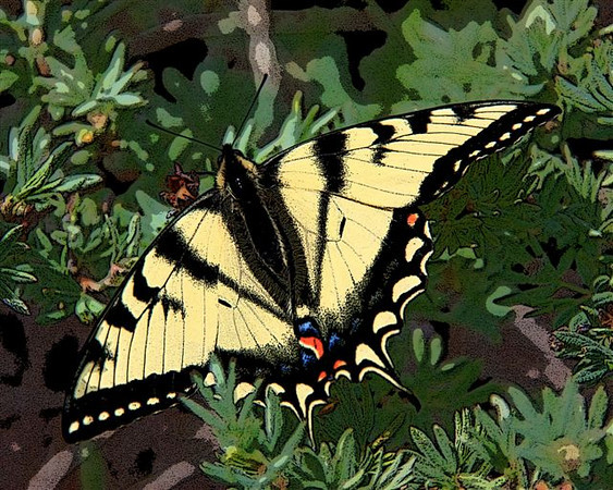 AR-Tiger Swallowtail-Howard Brown-Print