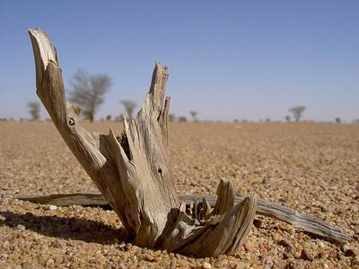 TR-Dead Wood in the Desert-Richard Yoann