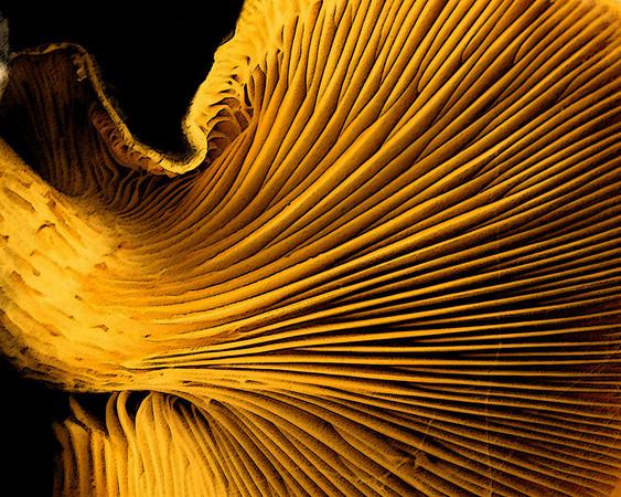 AR-Dark Side of the Mushroom-Amy Wildeman-Print