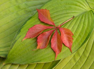 TR-Garden Colors-Hilda Noton