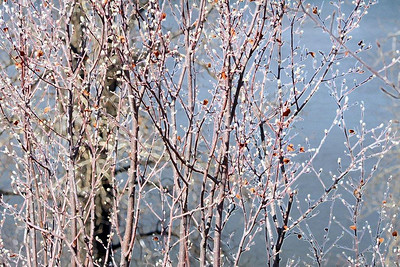 AR-Soft Willow-BrendaRose Bellenie-Wynne jpg