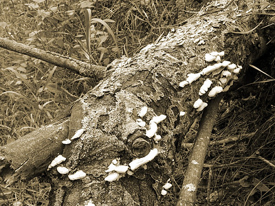 BW-Fungus Among Us-Gayvin Franson