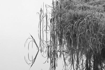 BW-Still Morning Reflection-Kyle Remus