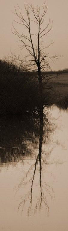 BW-Rippling Tree-Sherry Duncan Paterson