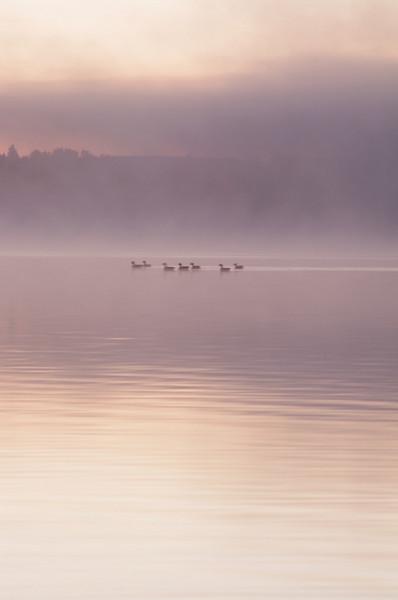 TR-Sunrise-Kyle Remus