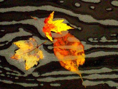 AR-Leaves on Water-Frank Johnson
