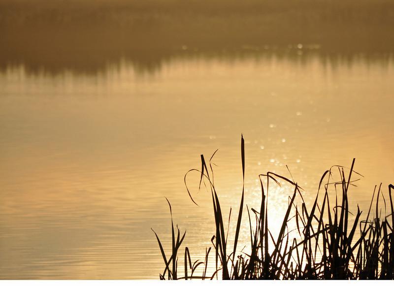 TR-Evening Sparkle-Sherry Duncan Paterson