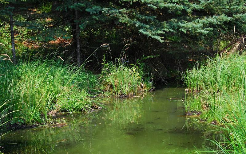 TR-Green River-Eve Kotyk