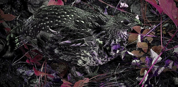 AR-Painted Prairie Grouse-Sherry Paterson
