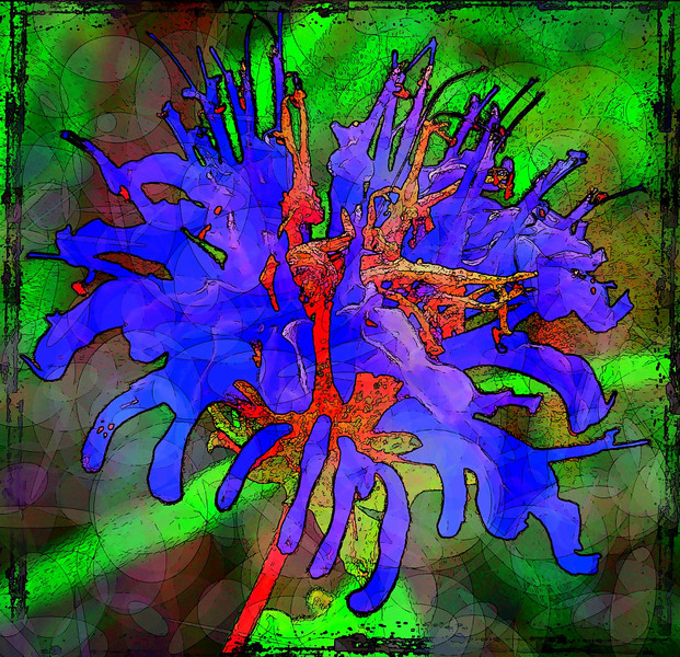AR-Grunge Weed-Sheryl Schmidt
