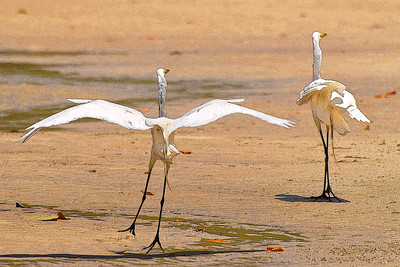 AR-Herons Landing Pad-Nina Henry