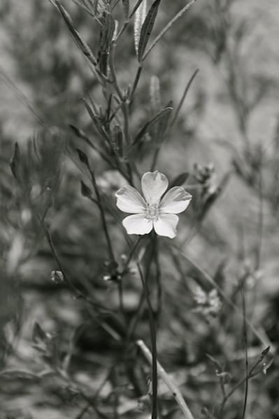 BW-Solitude-Theresa Pearson