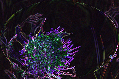AR-Purple Thistle-Valerie Ellis