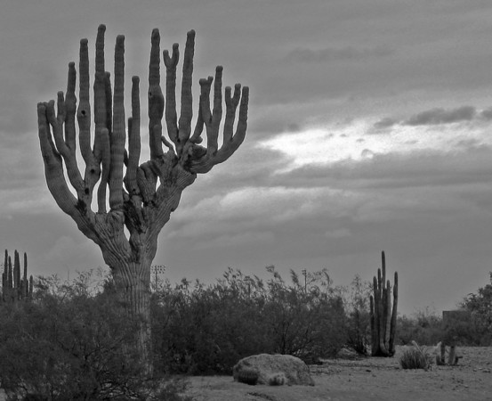 BW-The Old Man of the Desert-Connie Lofdahl