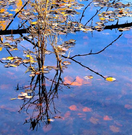 TR-Blue Pond-Hilda Noton