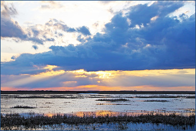 TR-Reflecting Rays on the Marsh-Betty Calvert