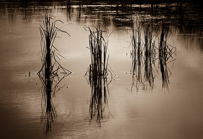 BW-Mystic Marsh-Michelle Lane