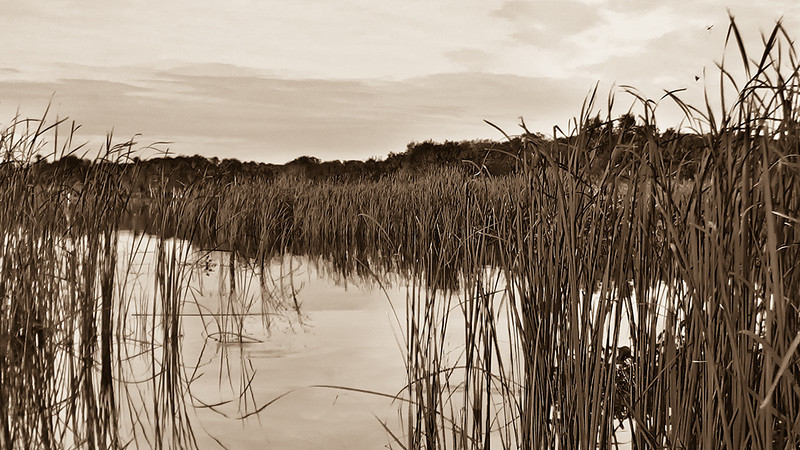 BW-Hiding in the reeds-Bob Anderson