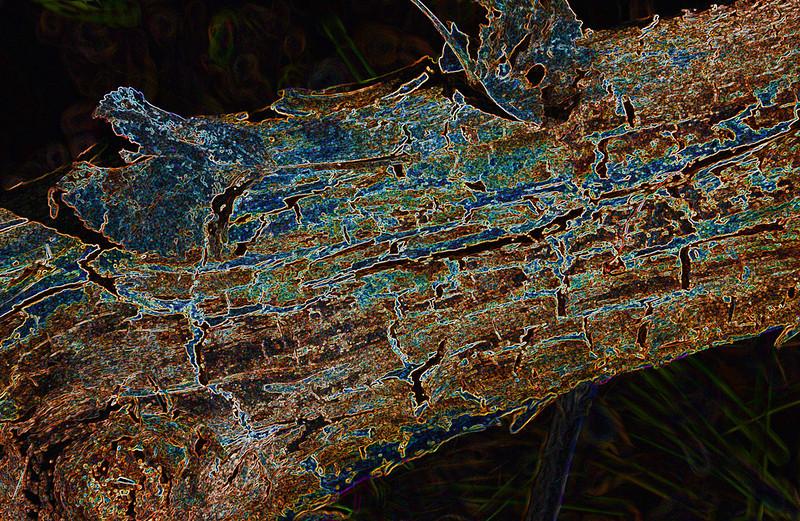 AR-Decay-Kathy Meeres