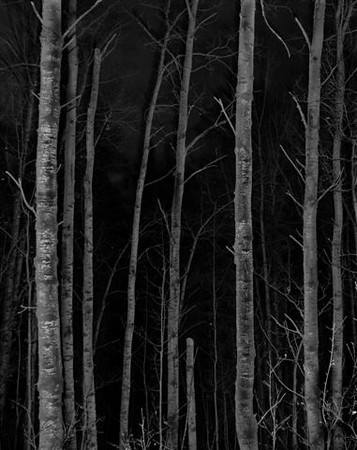 BW-Ghost Poplars-Gordon Sukut