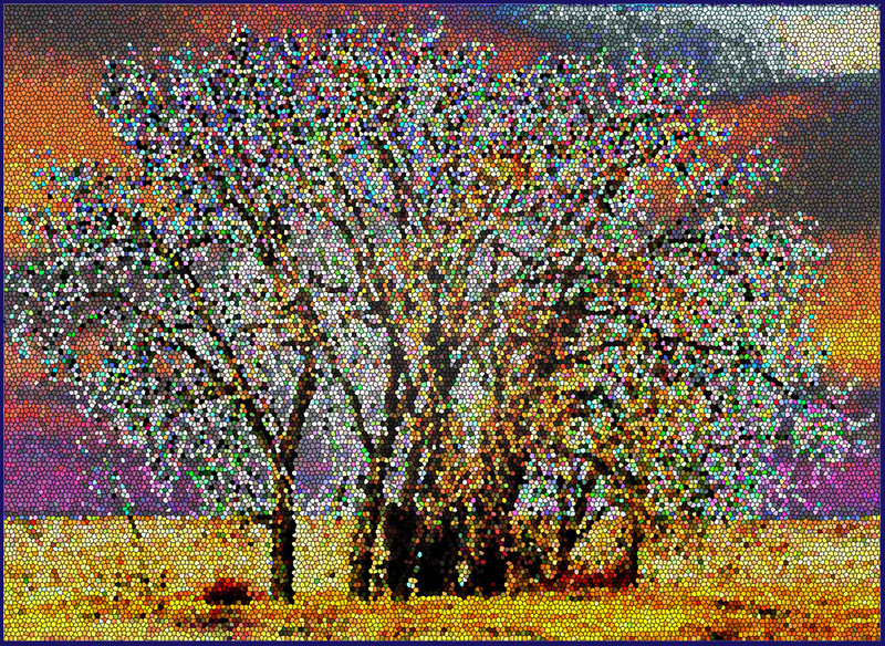 AR-Mosaic Elms-Betty Calvert