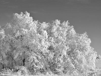 BW-Hoarfrost-Ian Sutherland