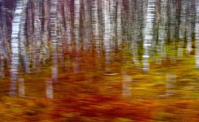 AR-Hillside Birch-Hans Holtkamp