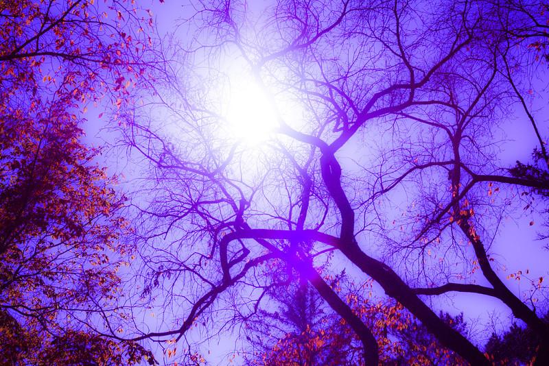 AR-Violet Fall-Caitlin LaRiviere