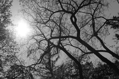 BW-Wild Branches-Jenita Abramson