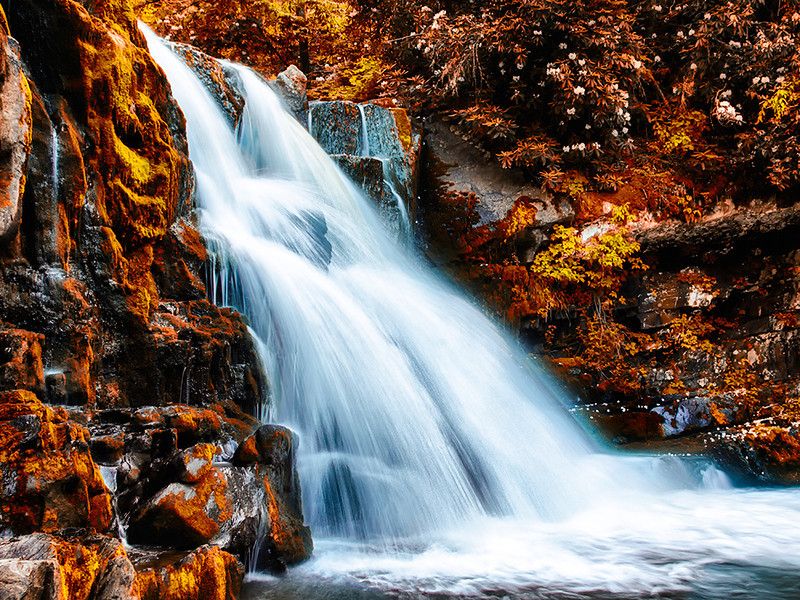 AR-Fountain of Natures Gold-Scott Prokop