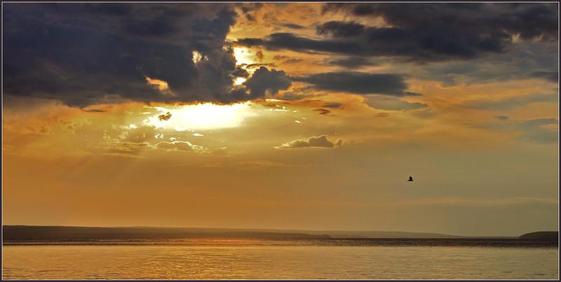 TR-Evening Flight-Betty Calvert