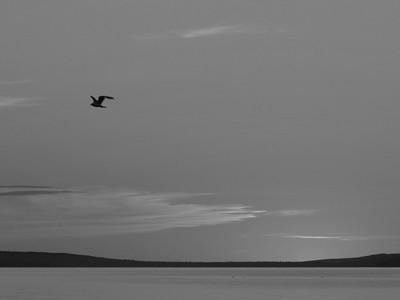 BW-JLSeagull-Ian Sutherland