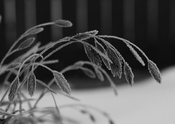 BW-Fall Frost-Cathy Baerg