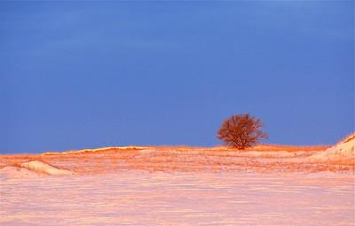 TR-Alone at Dawn-Hilda Noton