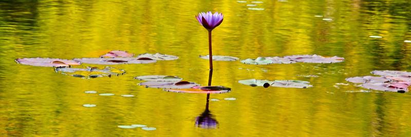 TR-On Golden Pond-Hans Holtkamp