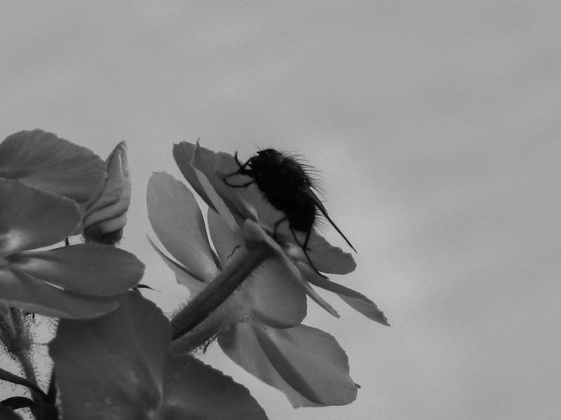 BW-Resting Spot-Rhea Preete