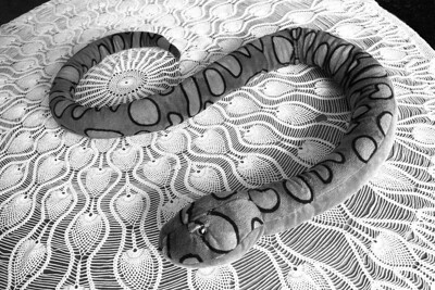 BW-Table Snake-Richard Kerbes