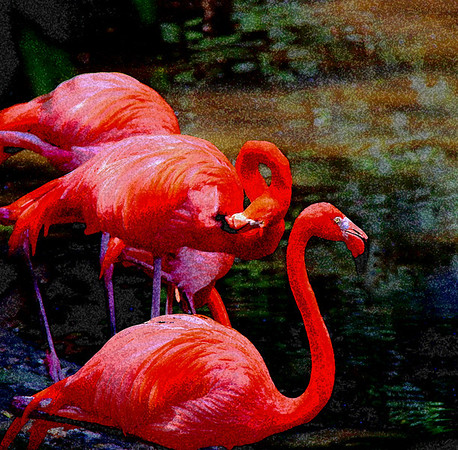 AR-Flamingos-Gordon Sukut